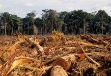 Pengaruh Perubahan Iklim Terhadap Hutan